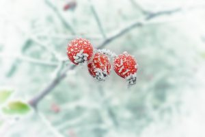 winter-654442_1920